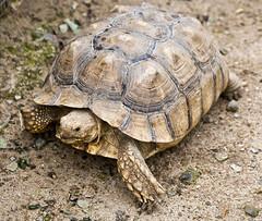 La Vall de les Tortugues / Turtle zoo - Photo of Brouilla
