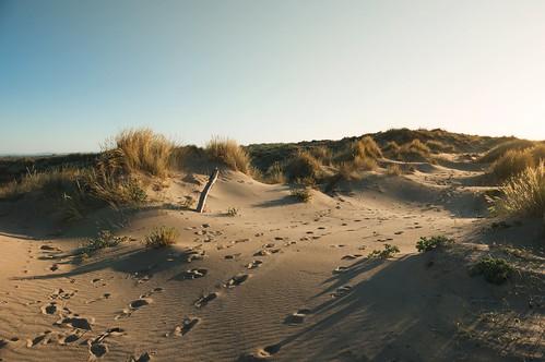 Chemin sur les dunes