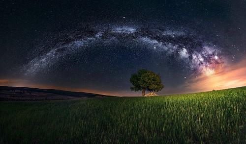 Enebro bajo la Vía Láctea