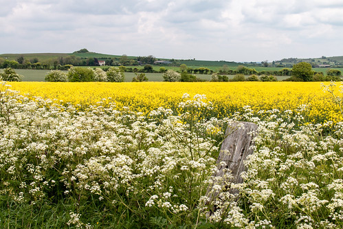 Colours of May in Wiltshire