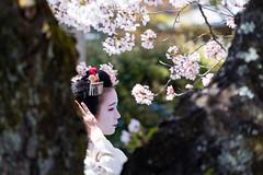 Maiko_20190409_109_27
