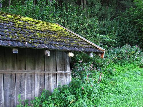 20110913 28 015 Jakobus Hütte Wald