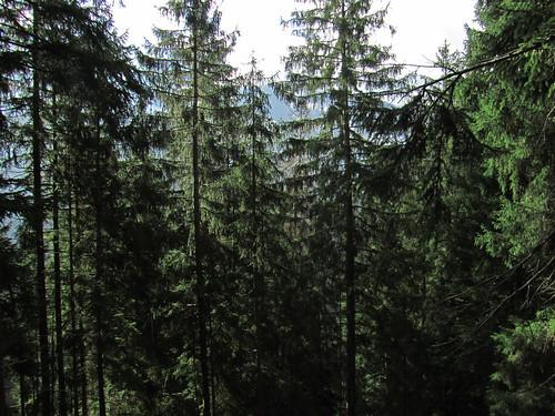 20110915 30 163 Jakobus Wald Bäume