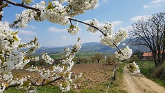 Bessenay (Rhône) - Au pays de la cerise - Photo of Montromant
