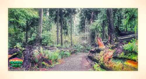 PATH-OF-THE-FALLEN-GIANTS-JEDEDIAH-SMITH-STATE-PARK-HDR-LUMINAR-3-900WX489H-300PPI-2019 © Cody Jacobson-ZEN MOUNTAIN MEDIA all rights reserved