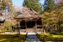 Sanzen-in, Ojo-Gokuraku-in (Amitabha Hall) -2 (April 2019)