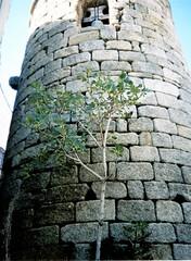 Torre redonda del castillo de Eljas / As Ellas 2