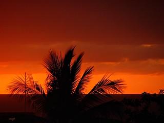 """""""Noche Tropical"""""""