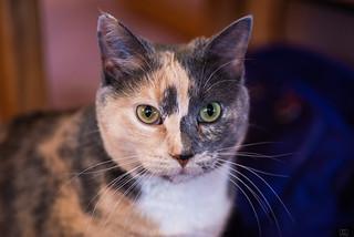 Mom's kitty- Sally