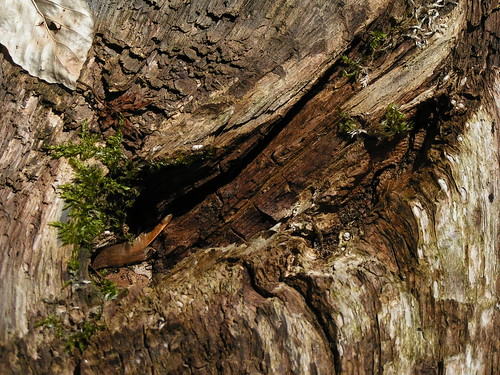 20100417 117 Holzstruktur Blatt Moos_K