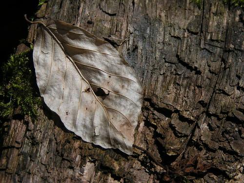 20100417 118 Holzstruktur Blatt Moos_K
