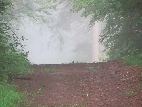 20120607 004 Wald Weg Nebel