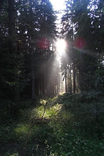 20120614 264 Wald Sonne Licht_K