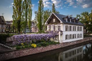 Strasbourg_Glycine