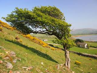 A little bit of shade on a hot, hazy day in the Dysynni valley ...