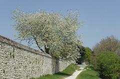 Cour-sur-Loire (Loir-et-Cher)