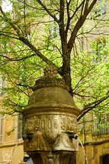 l'arbre au dessus de la fontaine