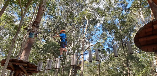 Treetops, Newcastle, NSW