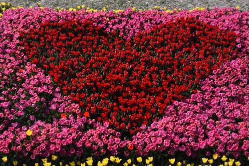 Tulips in the Netherlands, Creil 20-Apr-2019 by Johan Hetebrij