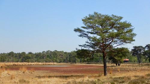 Het lijkt wel een savanne