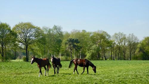 Paardbeestjes
