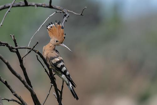 punky bird