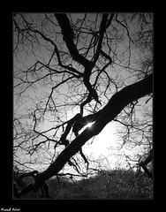 branches d'arbres - Cote d'Arelle - Jura
