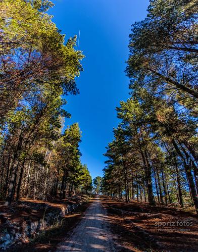 Tuggeranong Pines 4x Pano