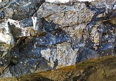 Clast-rich impact pseudotachylite (Sudbury Breccia, Paleoproterozoic, 1.85 Ga; Crab Lake South roadcut, south-southeast of Cartier, Ontario, Canada) 11