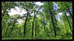 Forêt - Photo of Bouffémont