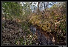 Marais du Cônois (marais tufeux de pente)