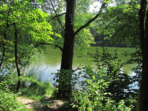 20110831 15 203 Jakobus Wald Traun Fluß