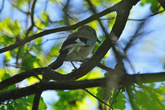 Singing in the shade - Photo of Marcoussis