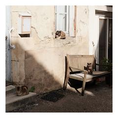 Les 3 chats - Photo of Quincy-le-Vicomte