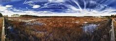 180° Panorama Blackwater National Wildlife Refuge Park(1)