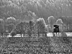 Lindauer Moor