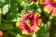 2018 NC Botanical Gardens Aug