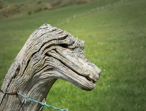 Dragons Head.