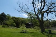 Cedarmere Park (19)