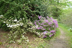 Planting Fields Arboretum - May 2019 (2)