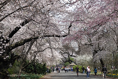 Under a Canopy of Blossoms