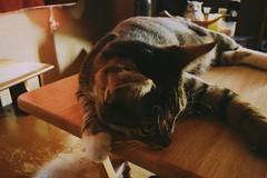 Rey the cat