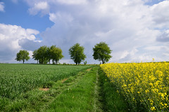 Promenons nous dans les champs