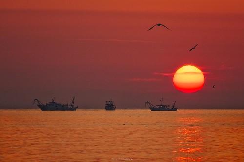 Sunrise, Fishing boats and Seagulls