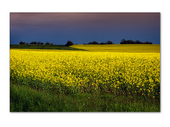 symphony in yellow and blue - Photo of Jours-en-Vaux