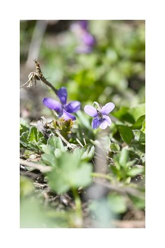 Voilà le printemps 2