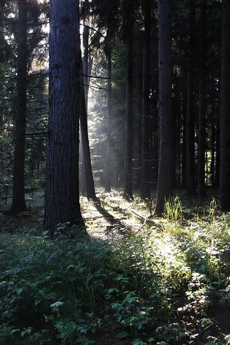 20120614 272 Wald Sonne Licht