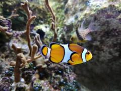 Aquarium Talmont Saint Hilaire.