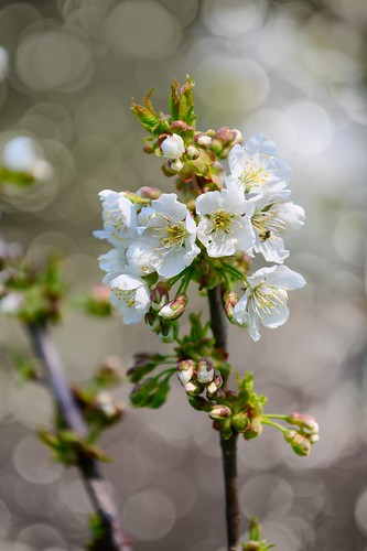 White spring ☀️🌳