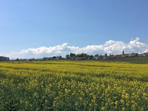 Fields along the road
